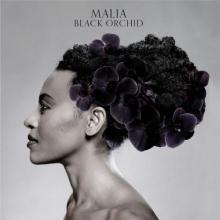 Black Orchid - de Malia